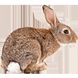 Раздел Кролики