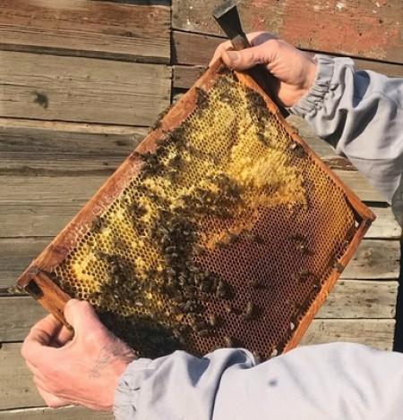 мёд Бузулук. Фото №3