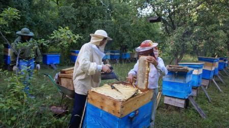 мёд Чебоксары. Фото №2