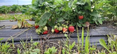 ягода Набережные Челны. Фото №3