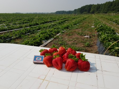 ягода Нижнекамск. Фото №1