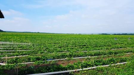 ягода Нижнекамск. Фото №3