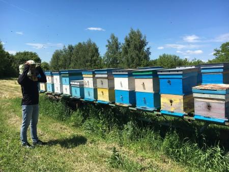 мёд Нижний Новгород. Фото №3