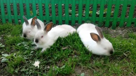 кролики Самара. Фото №1
