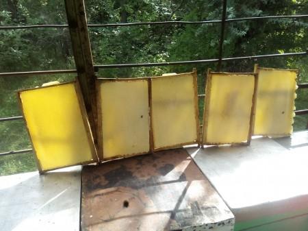 мёд Самара. Фото №3