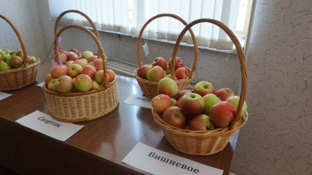яблоки Самара. Фото №1