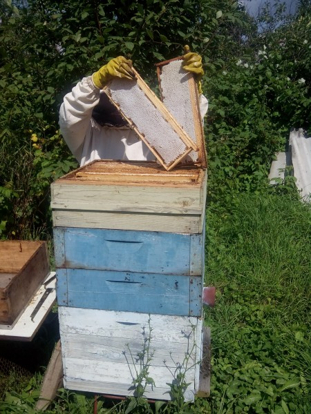 мёд Саранск. Фото №2