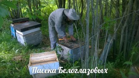 мёд Саранск. Фото №3