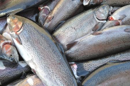 рыба Тольятти. Фото №3