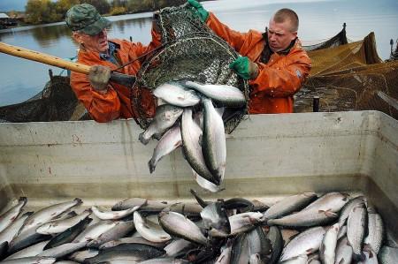 рыба Тольятти. Фото №1