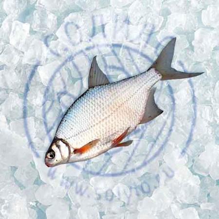 рыба Ульяновск. Фото №1