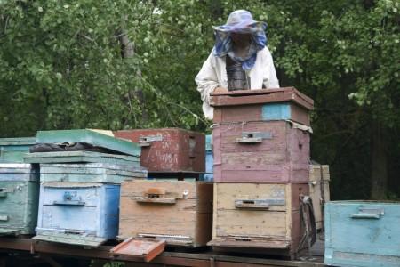 мёд Волгоград. Фото №3