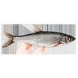 Раздел Рыба