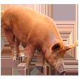 Категория Свинина