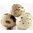 Категория Яйца перепелиные