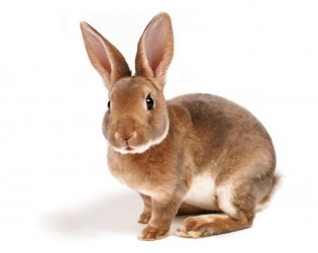 кролики Чебоксары. Фото №2