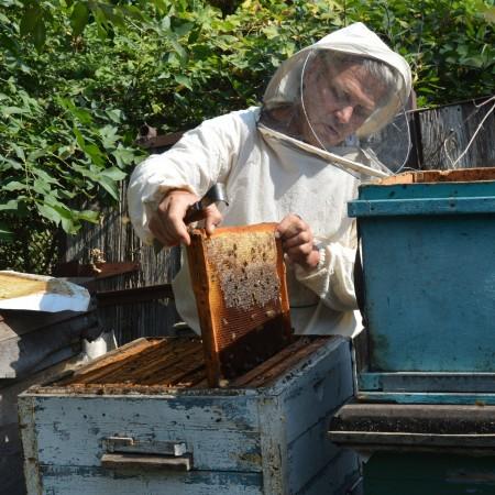 мёд Краснодар. Фото №1