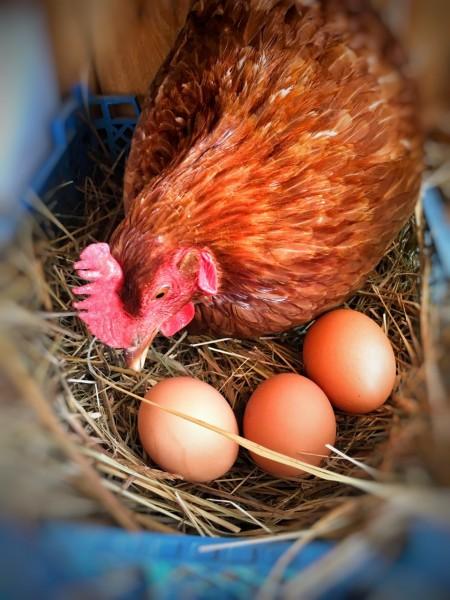 яйца куриные Нижний Новгород. Фото №2