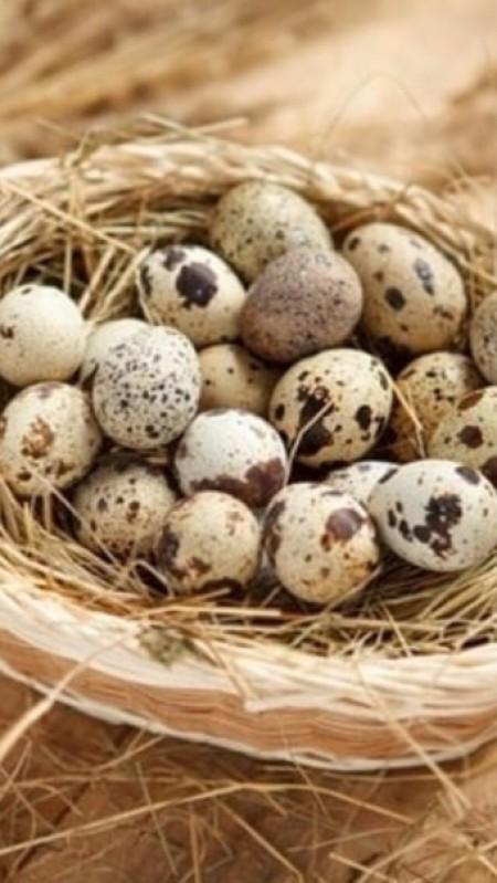 яйца перепелиные Оренбург. Фото №1
