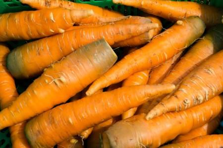 морковь Орёл. Фото №1