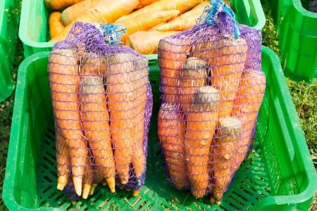 морковь Орёл. Фото №2