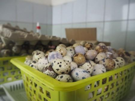 яйца перепелиные Орёл. Фото №1