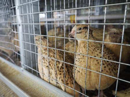 яйца перепелиные Орёл. Фото №2