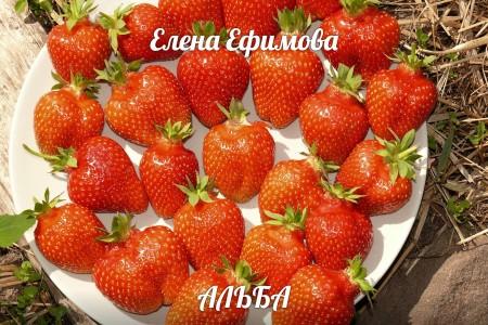 саженцы Псков. Фото №1