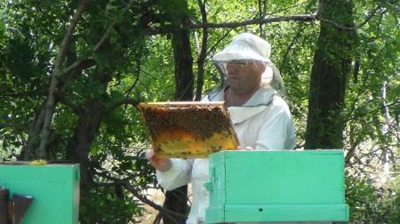 мёд Ростов-на-Дону. Фото №2