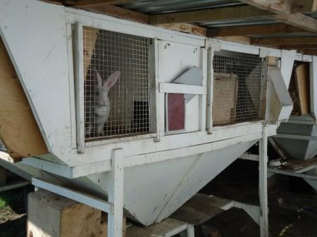 кролики Самара. Фото №2