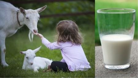 молоко Самара. Фото №1
