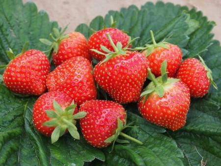 ягода Самара. Фото №1