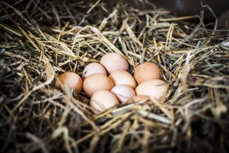яйца куриные Самара. Фото №1