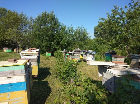 мёд Саранск. Фото №1