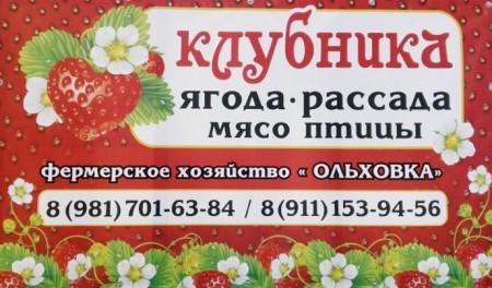 клубника Санкт-Петербург. Фото №1