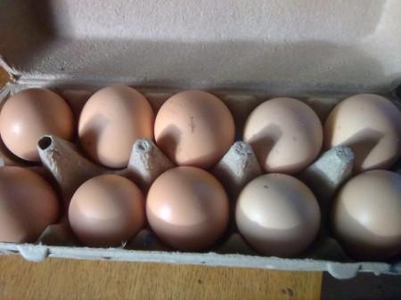 яйца куриные Уфа. Фото №2