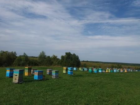 мёд Ульяновск. Фото №2