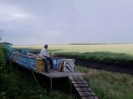 мёд Волгоград. Фото №2