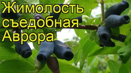 рассада Вологда. Фото №3
