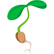 Раздел Семена