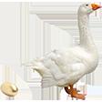 Категория Яйца гусиные