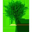 Категория Зелень